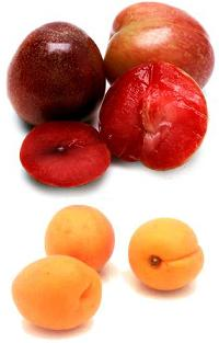 Pluots and apriums
