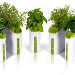 Power Plant Herb Garden
