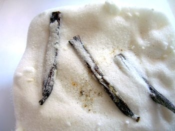 Vanilla Beans in Sugar