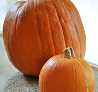 What is a sugar pumpkin?