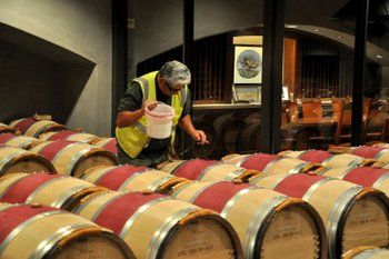 Topping off Barrels at Mondavi