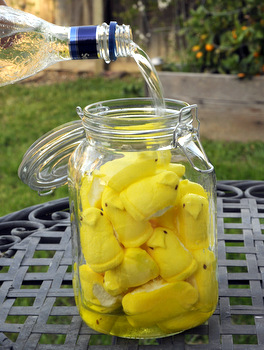 Infusing Vodka with Peeps
